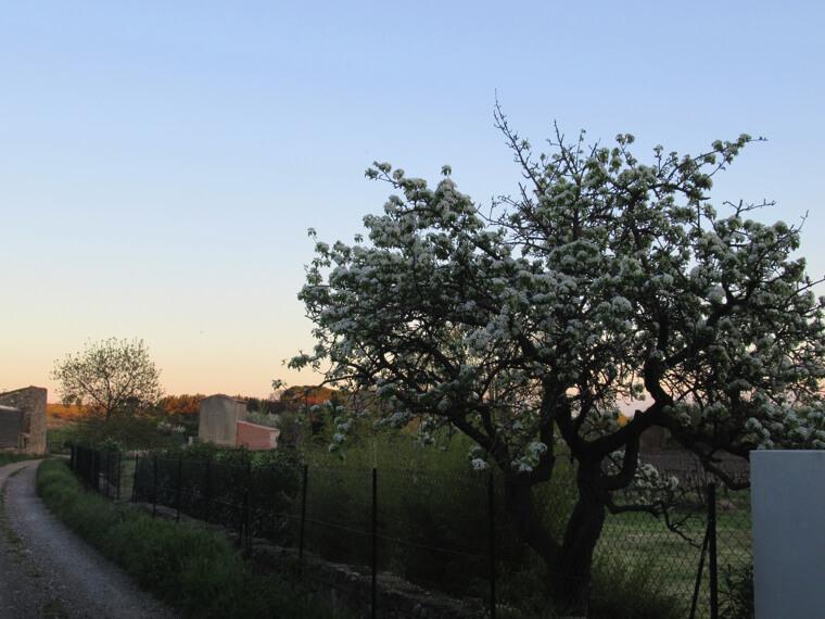 南フランス田舎 春の桜の散歩道|南仏写真館